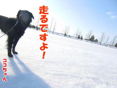 チャンスとティアラ+ココ-20130326-2-500.jpg