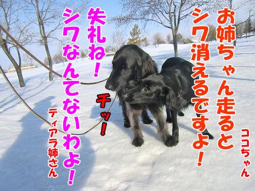 チャンスとティアラ+ココ-20130326-3-500.jpg