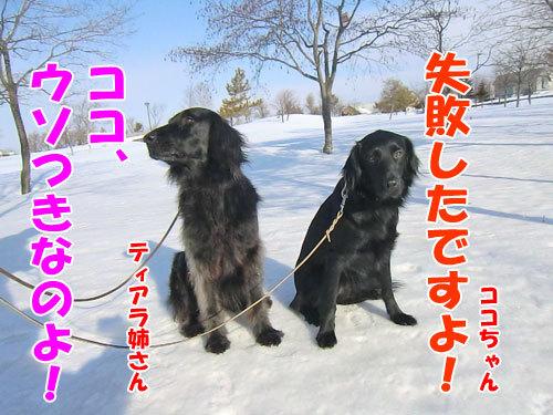 チャンスとティアラ+ココ-20130326-6-500.jpg