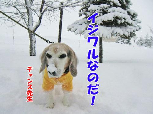 チャンスとティアラ+ココ-20130327-4-500.jpg