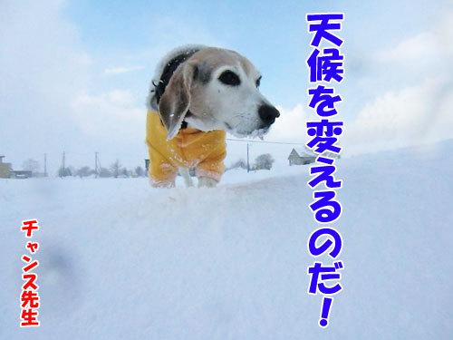 チャンスとティアラ+ココ-20130327-8-500.jpg