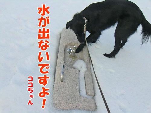 チャンスとティアラ+ココ-20130328-4-500.jpg