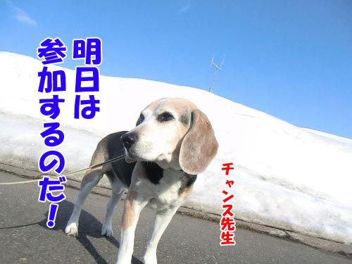 チャンスとティアラ+ココ-20130328-6-500.jpg
