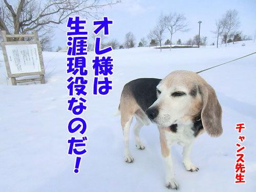 チャンスとティアラ+ココ-20130329-7-500.jpg