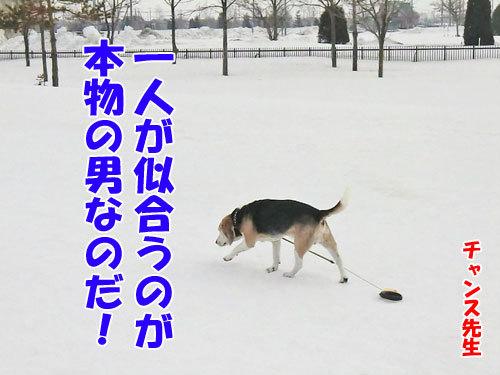 チャンスとティアラ+ココ-20130330-1-500.jpg
