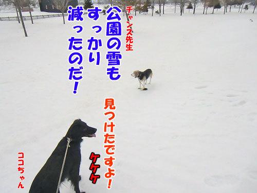 チャンスとティアラ+ココ-20130330-2-500.jpg