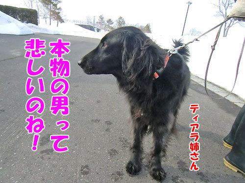 チャンスとティアラ+ココ-20130330-4-500.jpg