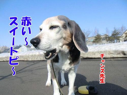 チャンスとティアラ+ココ-20130406-4-500.jpg