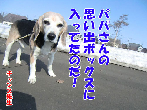 チャンスとティアラ+ココ-20130406-5-500.jpg