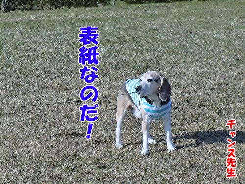 チャンスとティアラ+ココ-20130422-1-500.jpg