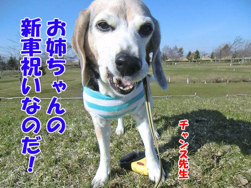 チャンスとティアラ+ココ-20130423-5-500.jpg