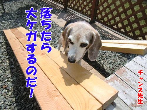 チャンスとティアラ+ココ-20130424-2-500.jpg