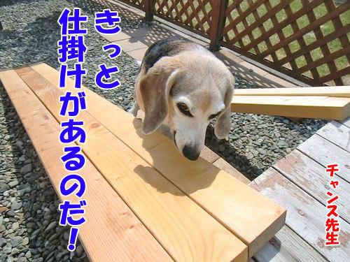 チャンスとティアラ+ココ-20130424-3500.jpg