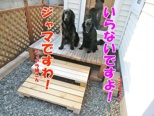 チャンスとティアラ+ココ-20130424-4-500.jpg