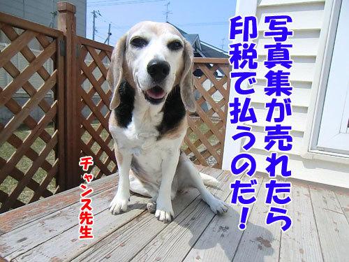 チャンスとティアラ+ココ-20130424-6-500.jpg