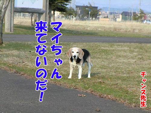 チャンスとティアラ+ココ-20130425-1-500.jpg
