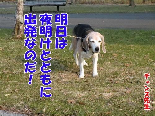 チャンスとティアラ+ココ-20130425-5-500.jpg