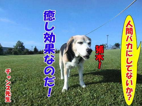 $チャンスとティアラ+ココ-20130425inoki-500.jpg
