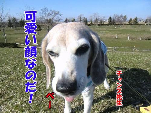 チャンスとティアラ+ココ-20130426-1-500.jpg