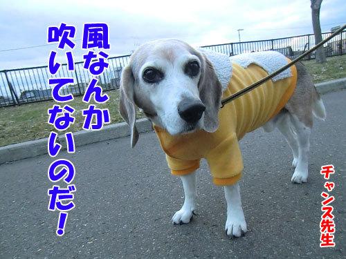 チャンスとティアラ+ココ-20130427-4-500.jpg