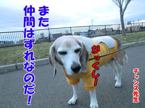 チャンスとティアラ+ココ-20130427-5-500.jpg
