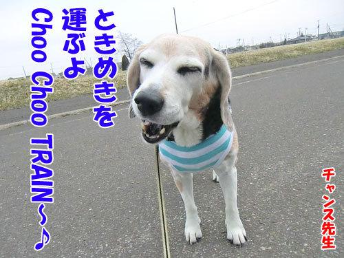 チャンスとティアラ+ココ-20130428-1-500.jpg