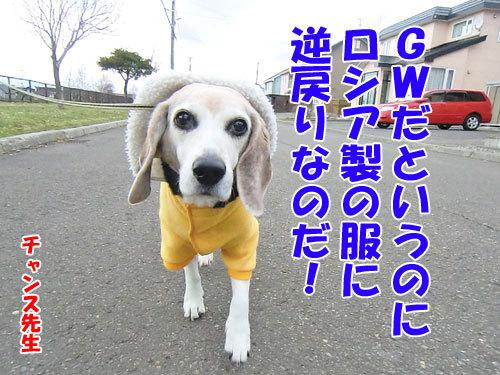 チャンスとティアラ+ココ-20130429-1-500.jpg