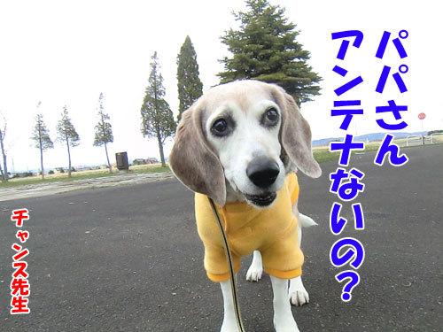 チャンスとティアラ+ココ-20130429-3-500.jpg