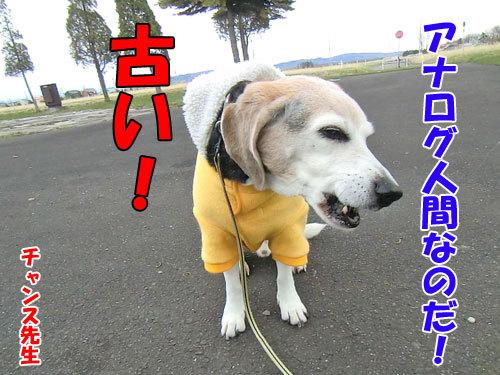 チャンスとティアラ+ココ-20130429-4-500.jpg