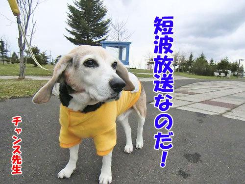 チャンスとティアラ+ココ-20130429-7-500.jpg