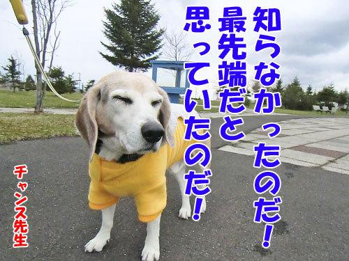 チャンスとティアラ+ココ-20130429-8-500.jpg