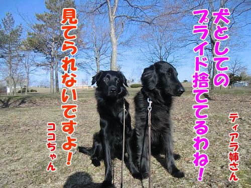 チャンスとティアラ+ココ-20130501-2-500.jpg