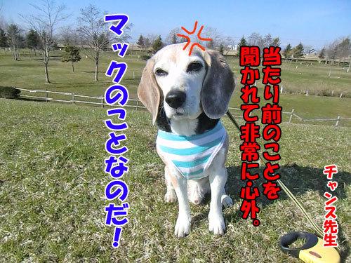 チャンスとティアラ+ココ-20130501-3-500.jpg