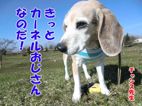 チャンスとティアラ+ココ-20130501-4-500.jpg