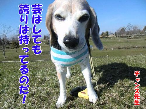 チャンスとティアラ+ココ-20130501-5-500.jpg