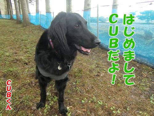 チャンスとティアラ+ココ-20130502-1-500.jpg