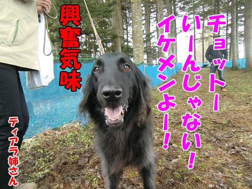 チャンスとティアラ+ココ-20130502-2-500.jpg