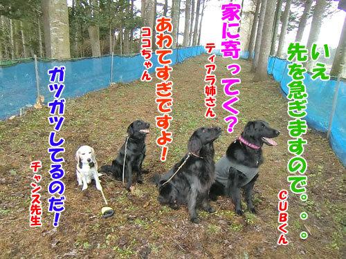 チャンスとティアラ+ココ-20130502-6-500.jpg