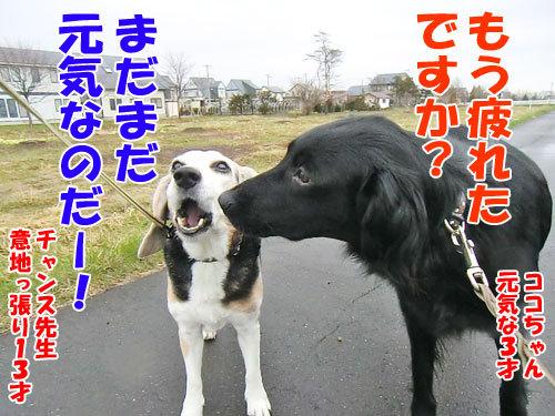 $チャンスとティアラ+ココ-20130502taion.jpg