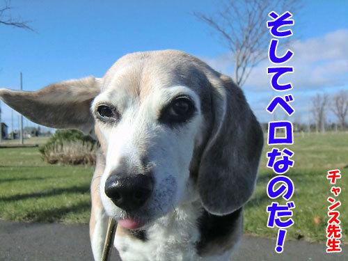 チャンスとティアラ+ココ-20130503-7-500.jpg