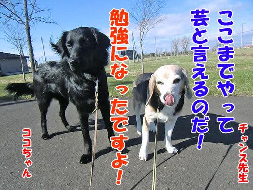 チャンスとティアラ+ココ-20130503-8-500.jpg