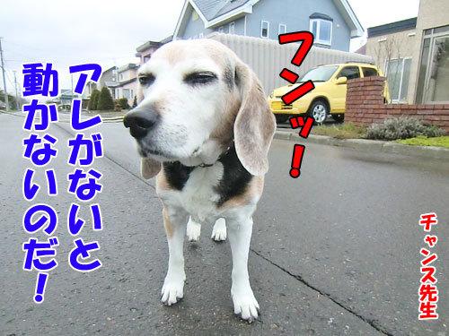 チャンスとティアラ+ココ-20130505-3-500.jpg