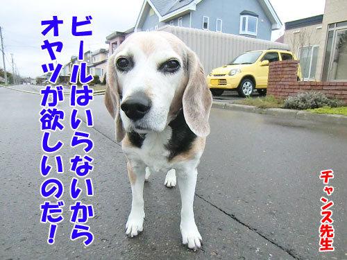 チャンスとティアラ+ココ-20130505-6-500.jpg