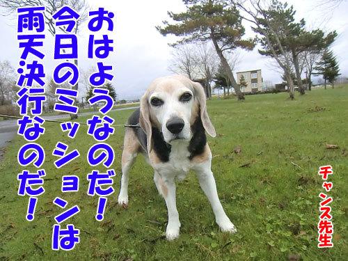 チャンスとティアラ+ココ-20130506-1-500.jpg