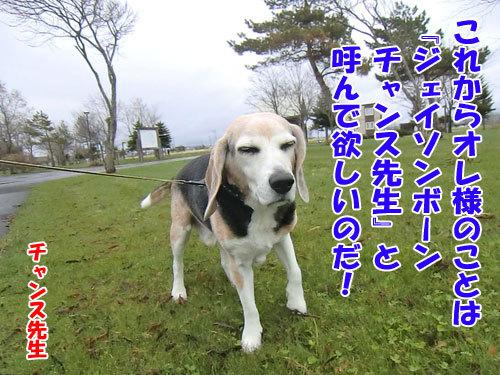 チャンスとティアラ+ココ-20130506-2-500.jpg