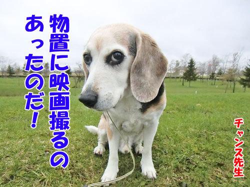 チャンスとティアラ+ココ-20130506-6-500.jpg
