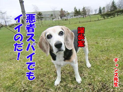 チャンスとティアラ+ココ-20130506-9-500.jpg