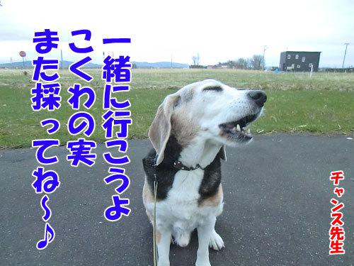 チャンスとティアラ+ココ-20130507-1-500.jpg