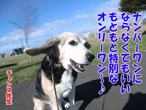 チャンスとティアラ+ココ-20130507-2-500.jpg