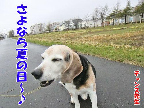 チャンスとティアラ+ココ-20130507-3-500.jpg